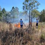 controlled burn volunteering