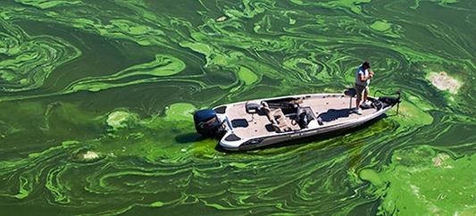 cyanobacteria-blue-green-algae-fishery