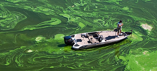 cyanobacteria-blue-green-algae-fishery