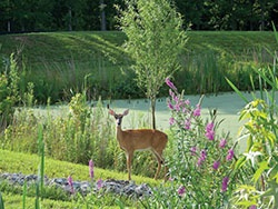 dont-feed-wildlife-deer-pond-e.jpg