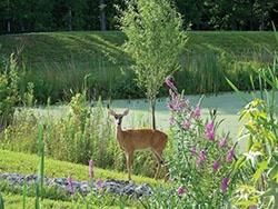 dont-feed-wildlife-deer-pond-e.jpg