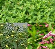 emergent-plants.jpg