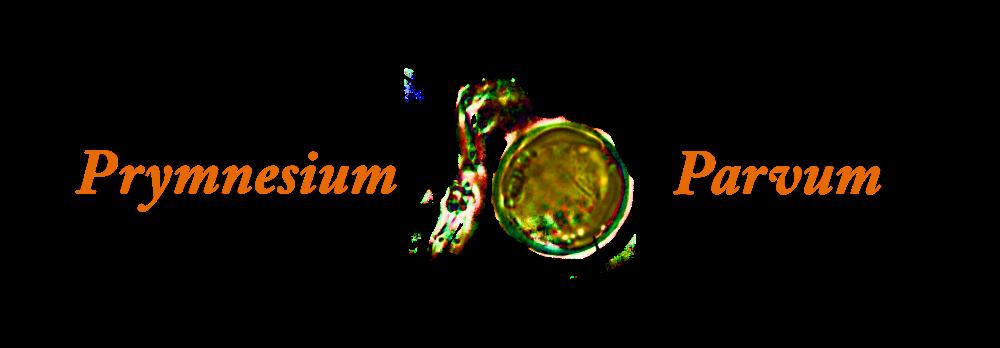 Prymnesium parvum