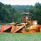 harvesting-large-lake.jpg