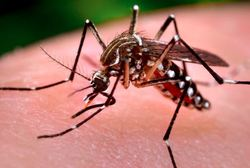 Managing Mosquitoes