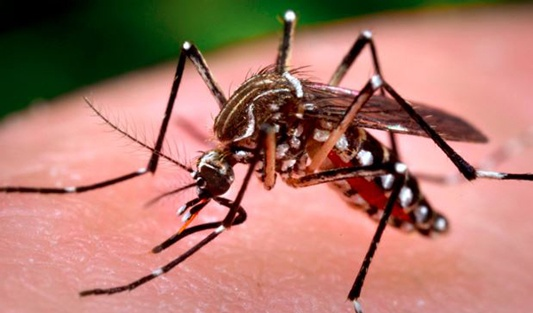 mosquito-management-community-tips-1