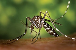 reduce mosquitoes and disease