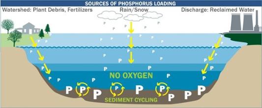 phosphorus loading-1-1