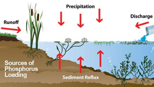 phosphorus-educational-chart