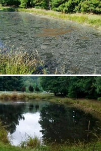 pond-before-after-sparta-nc.jpg