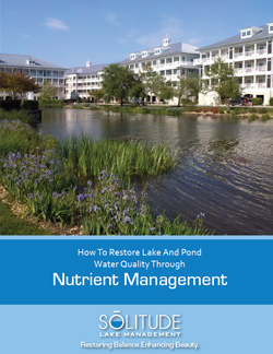 How to Restore Pond Water Quality Through Nutrient Management