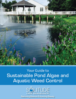 Guide to Sustainable Pond Algae and Aquatic Weed Control