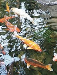 sonic-pond-management-pond.jpg