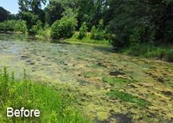 Golf_course_pond_Haymarket_VA_3.25acres_BEFORE_algae_treatment-4