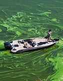 toxic algae webinar