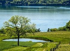 vineyard-irrigation-lake-new-york.png
