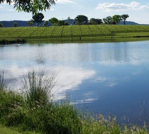 vineyard-lake-2.jpg
