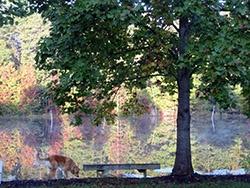 wallace-fall-fredericksburg-va-daveb-10.15_e.jpg