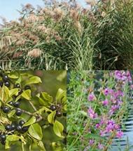 wetland-plants.jpg