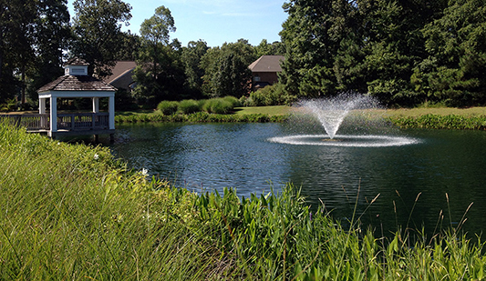 Winter Vegetative Buffer Trimming for Lakes and Ponds
