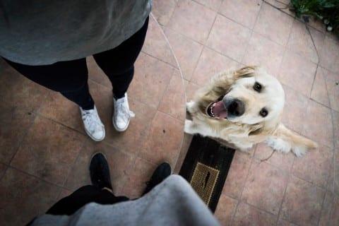 clueless dog safe pay event rentals