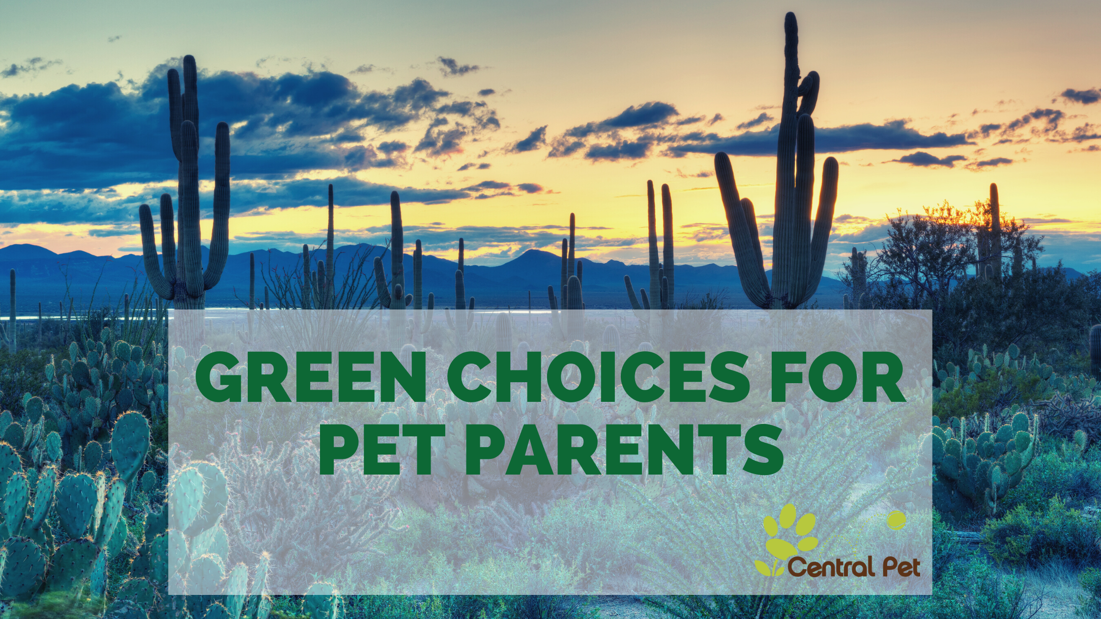 Green Choices for Pet Parents
