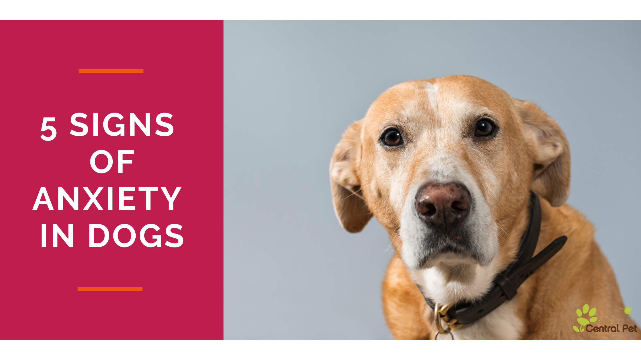 Does Your Dog Have Anxiety? 5 Signs You Might Not Expect