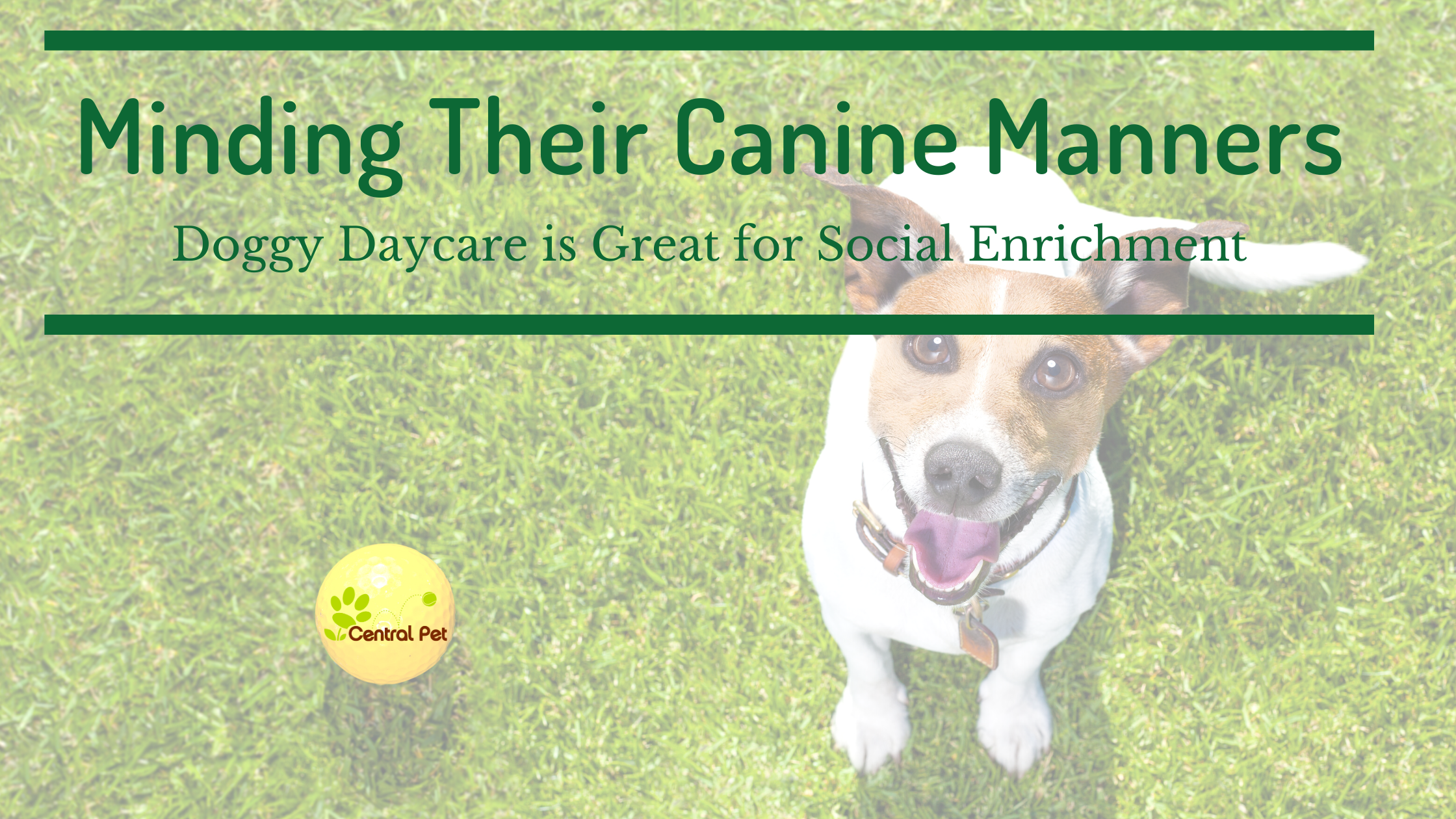 Minding Their Canine Manners: Doggy Daycare is Great Social Enrichment