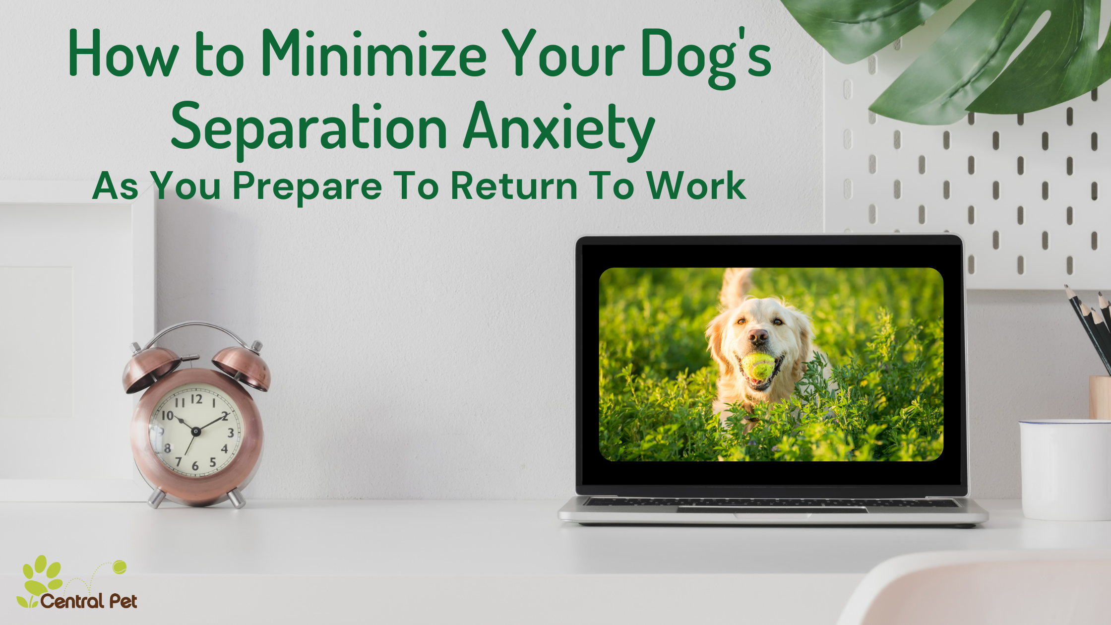 How to Minimize Your Dog's Anxiety as You Prepare to Return to Work