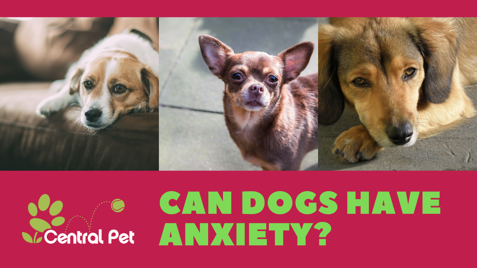 Can Dogs Have Anxiety?