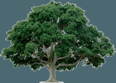 Beyond Buzzwords: Decision Trees