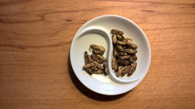 Edible insects: Getting over the 'yuck' factor